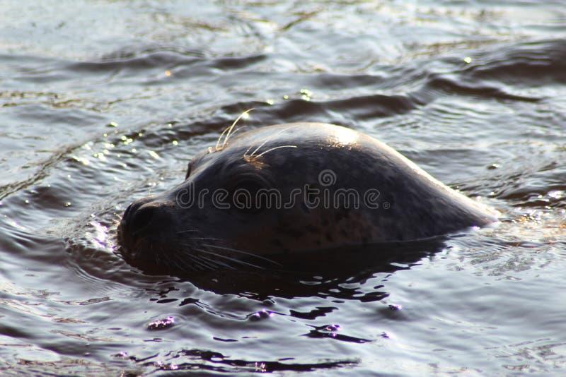 Simning för hamnskyddsremsa royaltyfri fotografi