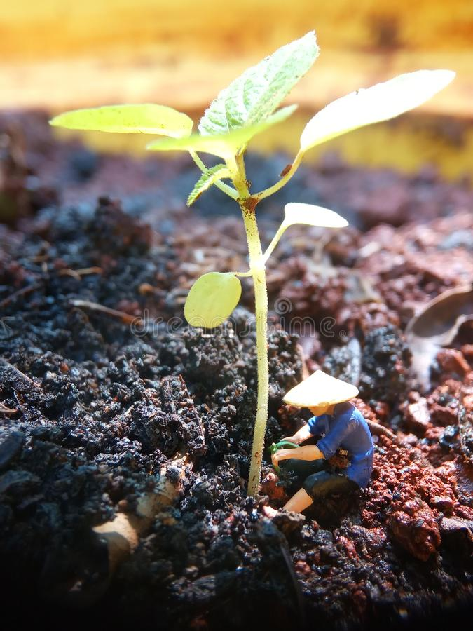 Simple Conceptual Illustration, Mini Figure man farming at limited area royalty free stock photography