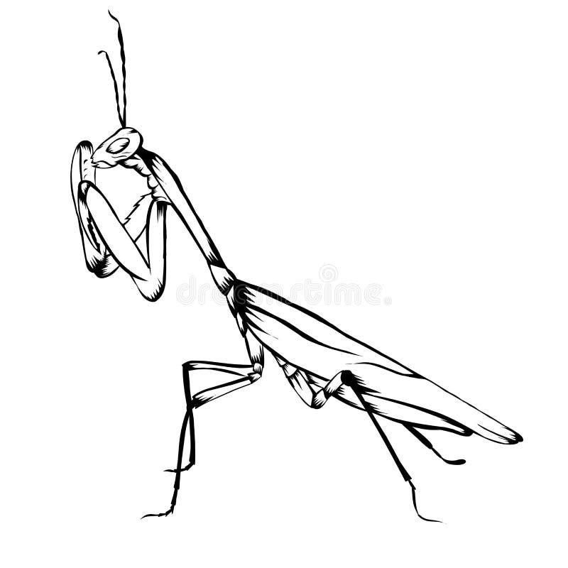 praying mantis drawing tattoo