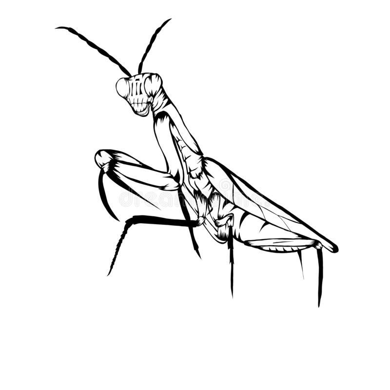 praying mantis tattoo small