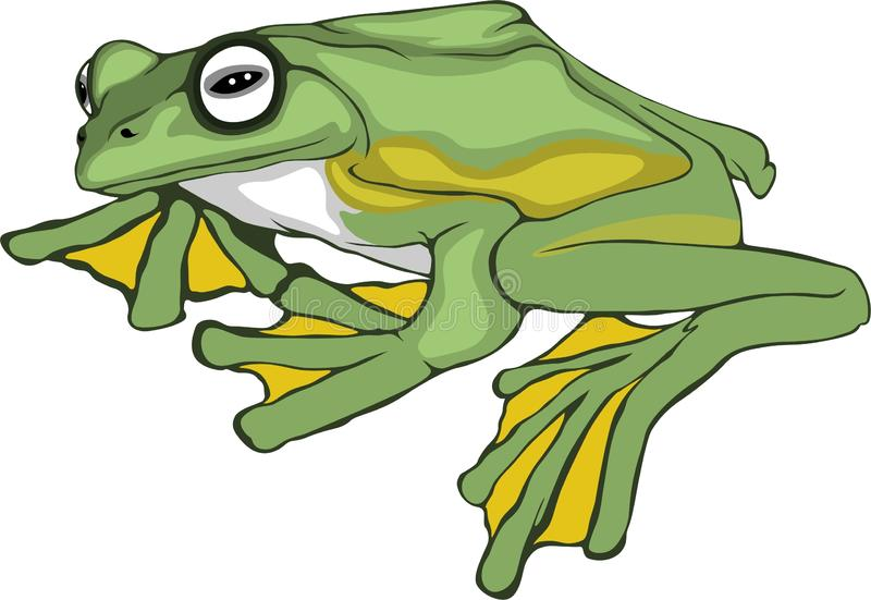 Simple-draw-frog royalty free stock photo