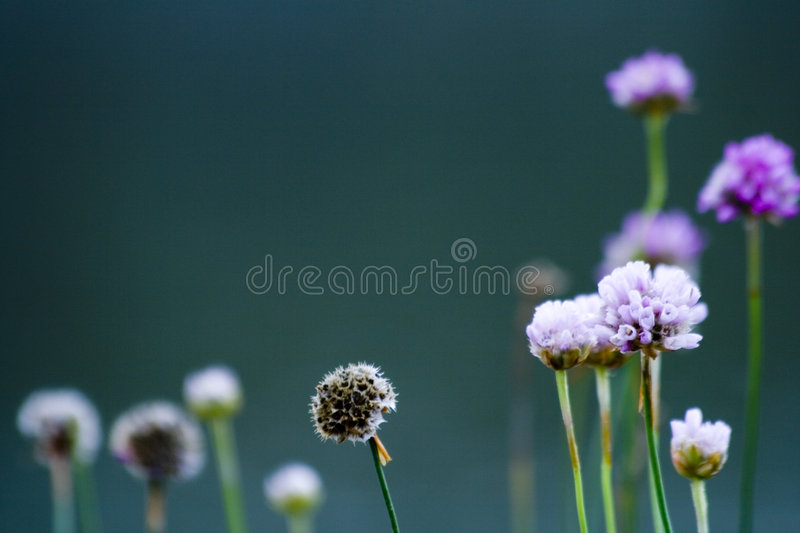 Simple flowers royalty free stock image