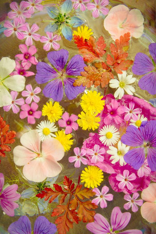 Colourful flowers stock photography