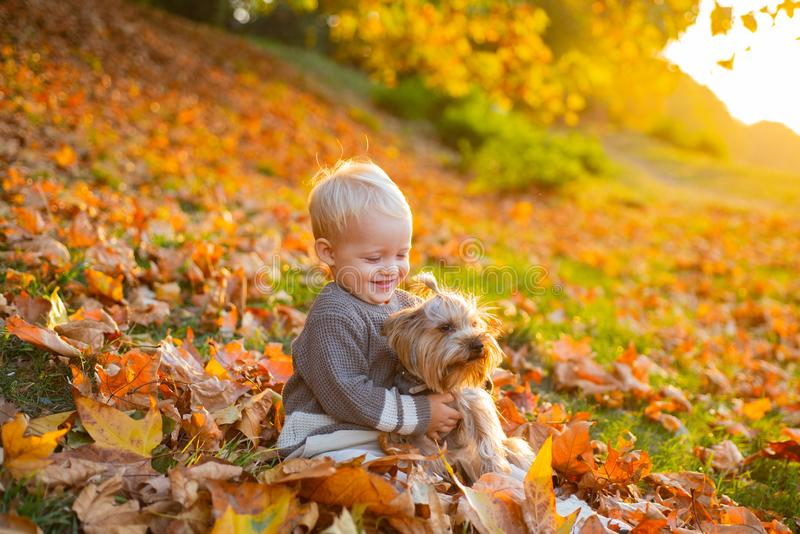 Simple happiness. Child play with yorkshire terrier dog. Toddler boy enjoy autumn with dog friend. Small baby toddler on stock images
