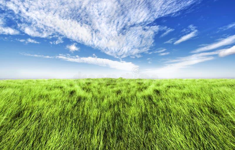 Simple high grass horizon. Beautiful altitude horizon with blue cloudy sky and green high grass stock image