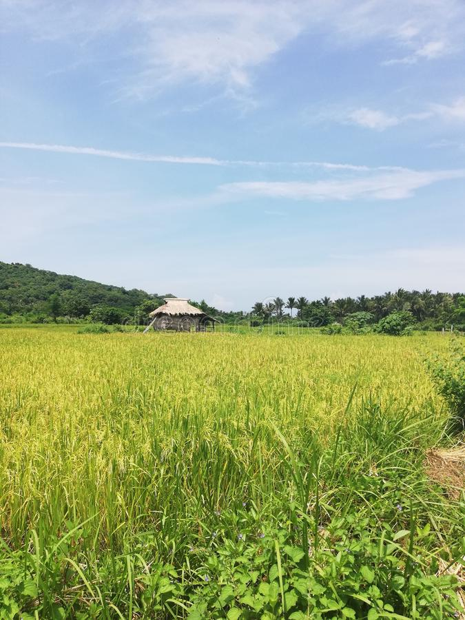 Simple self-built small hut amidst rice field on Mindoro, Philippines royalty free stock photos