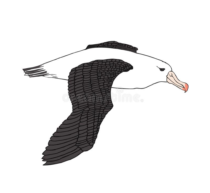 Simple Illustration of a large Albatross. Simple but accurate detailed illustration a large Albatross soaring over the ocean looking for fish stock illustration