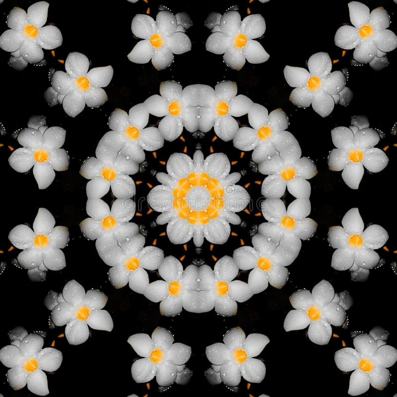 Simple Kaleidoscope Edit with White Flowers. Simple kaleidoscope  with white flowers, illustration royalty free stock image