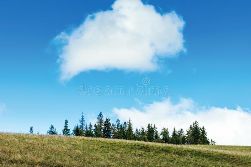Simple nature scenery with trees and cloud. Spruce trees on hill beneath a fluffy cloud. beautiful scenery royalty free stock images