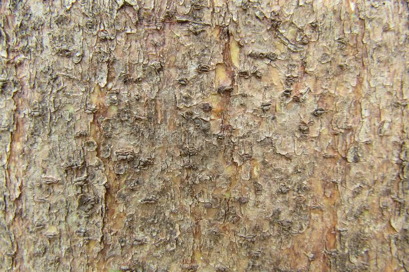 Classic Natural Wood pattern stock photography