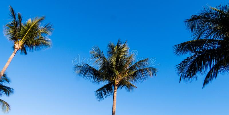 Beautiful blue sky and simple palm trees. Simple palm trees from the Bahamas with a beautiful blue sky in the background royalty free stock photo