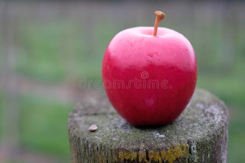 A simple red apple with soft background. stock photos