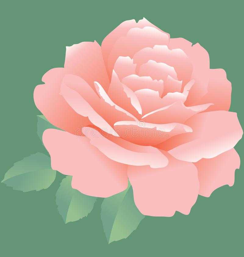 Download Simple rose stock vector. Illustration of fragility, concept - 23595210