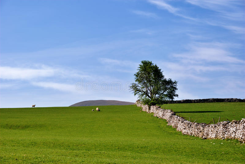 Simple rural scene. A simple rural scene near Kirkby Lonsdale, Cumbia, England stock image