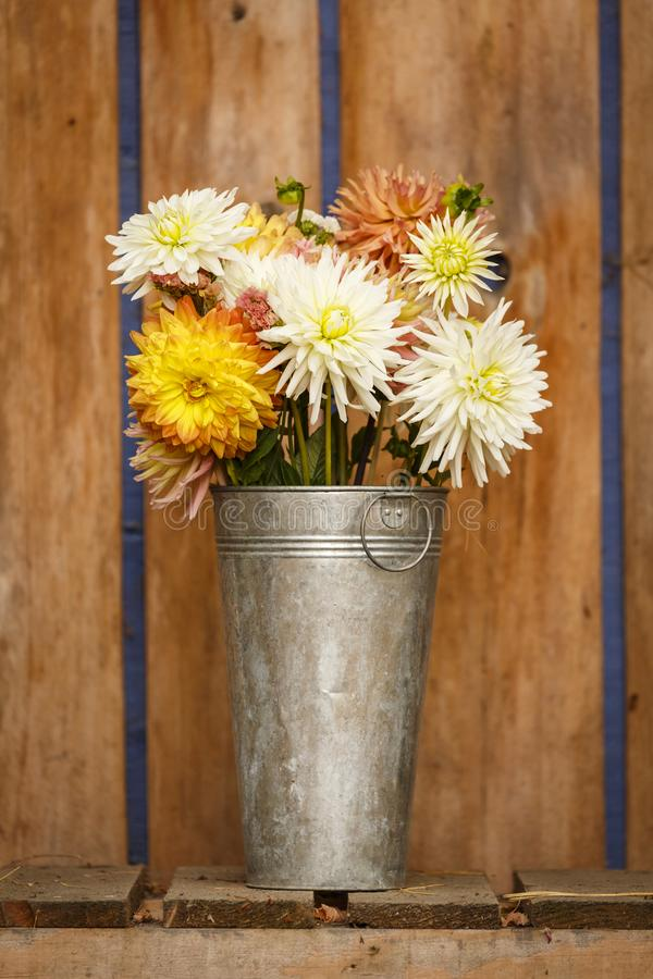 Simple, rustic country style fall autumn Thanksgiving season floral dahlia bouquet in galvanized metal vase home decorations royalty free stock photo