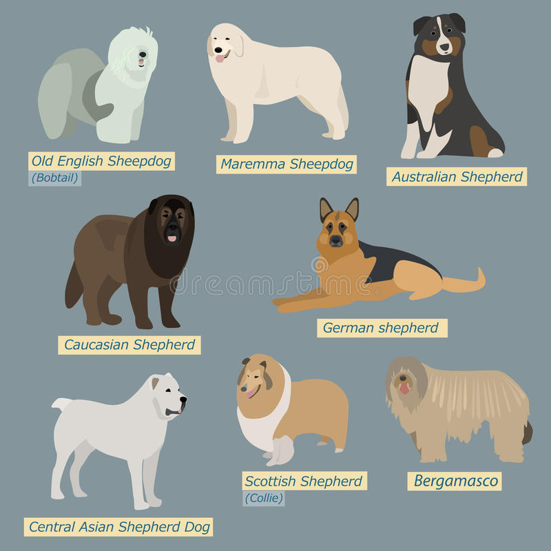 Simple silhouettes of dogs. Types of sheepdogs. In flat design vector illustration