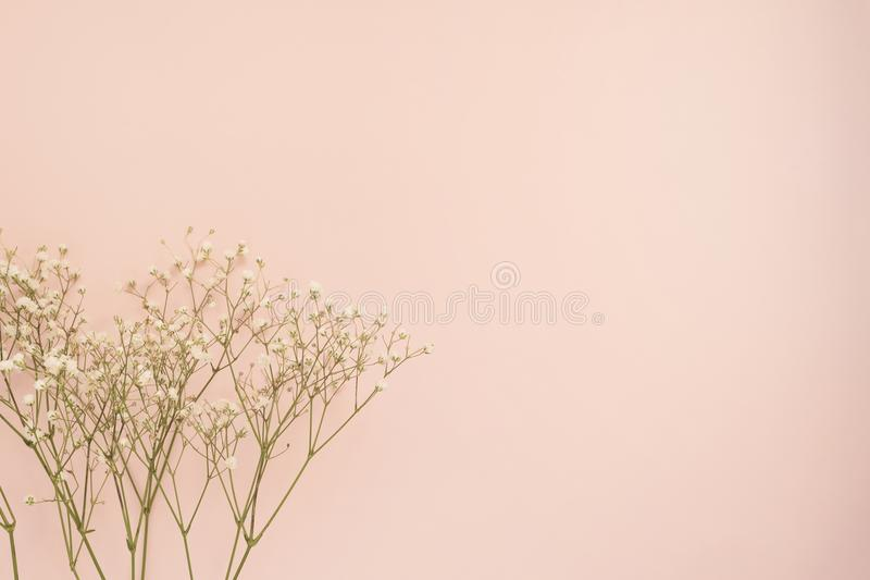 Simple white flower of roses on punchy pink background. Copy space, floral frame. Wedding, gift card, valentine`s day or mothers. Day background stock photography