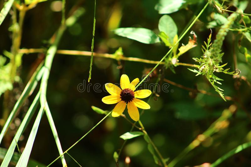 Simple yellow flower stock photography