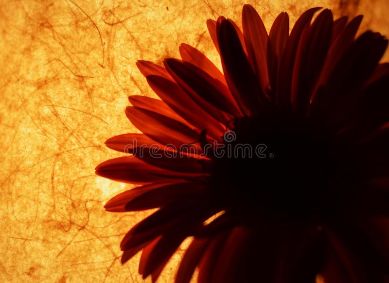 Simplement orange photo stock