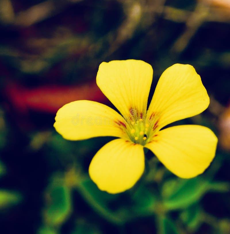 Simplicidad amarilla imágenes de archivo libres de regalías