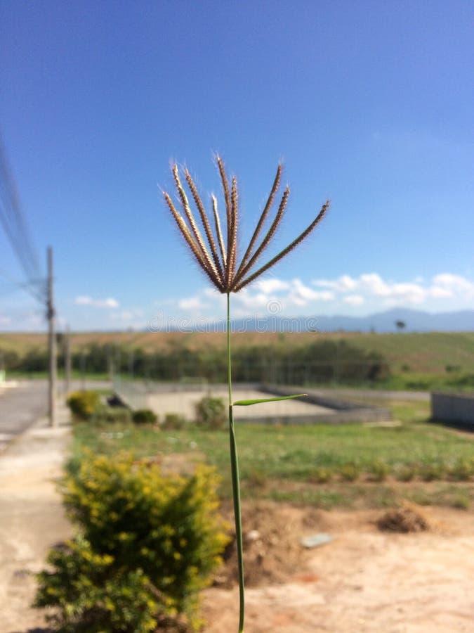 Simplicité de nature de méditation de champ ; Mato font le natureza de campo photos libres de droits
