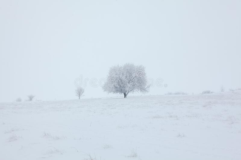 Simply winter scenery. Winter solitude , scenery with tree on the snowy hill stock photography