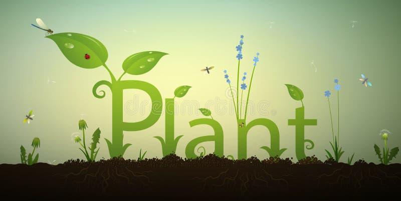 Simsen Sie Buchstabeanlage und grünen Frühlingssprössling mit Wurzeln und rotem Marienkäfer im Boden, Sommergartenaufschrift, stock abbildung
