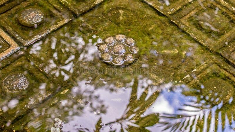 Simuleer de kelderverdieping van Siwa Leung het Hindoese fallische symbool van creatieve macht in het water, oogst Siem, Kambodja stock afbeeldingen