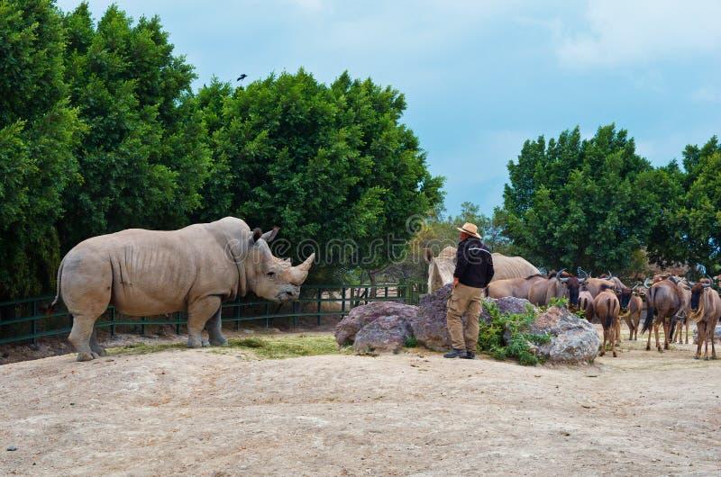 Simum del Ceratotherium del rinoceronte blanco Safari de Africam, Puebla, México fotografía de archivo