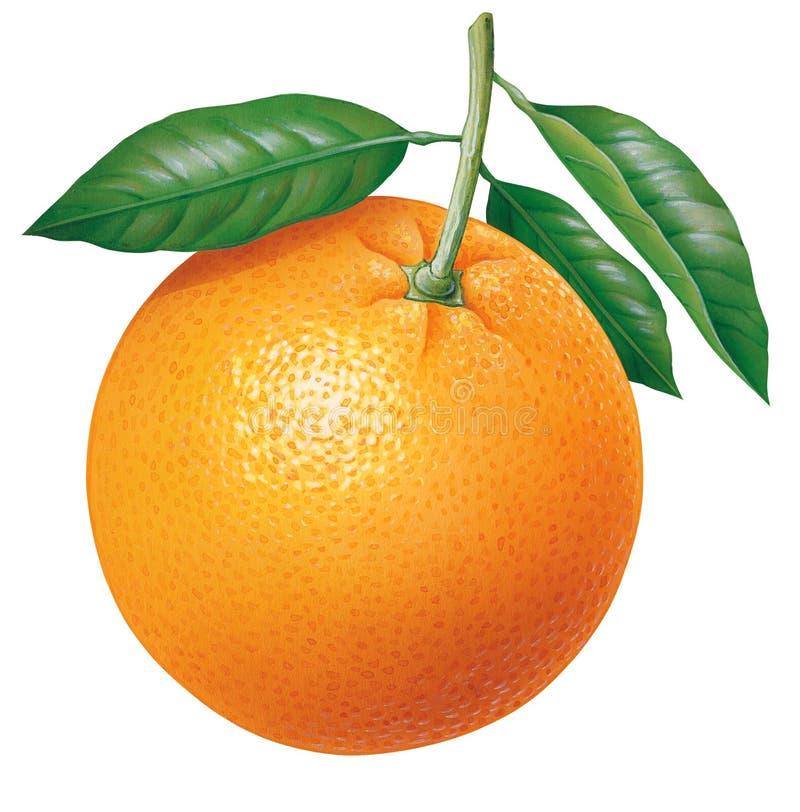 Sinaasappel royalty-vrije illustratie