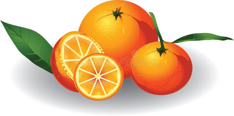 Sinaasappel & mandarijn royalty-vrije illustratie