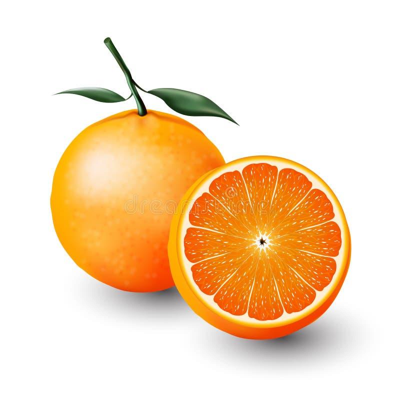 Sinaasappel en de helft van sinaasappel, transparant fruit, Vector vector illustratie