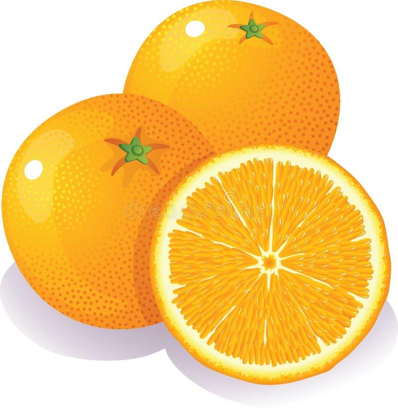 Sinaasappelen vector illustratie