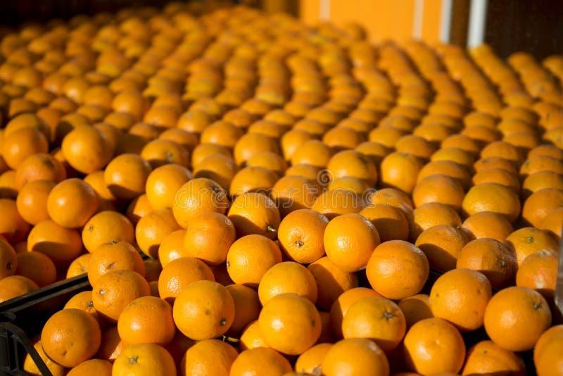 Sinaasappelen in een groentehandelaar in Kadikoy, Istanboel, Turkije stock fotografie