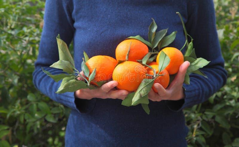 Sinaasappelen in handen stock fotografie