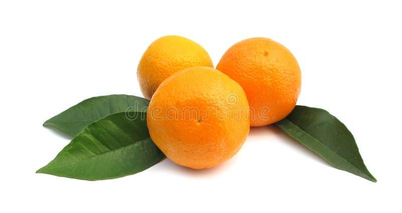 Sinaasappelen met bladeren royalty-vrije stock afbeeldingen