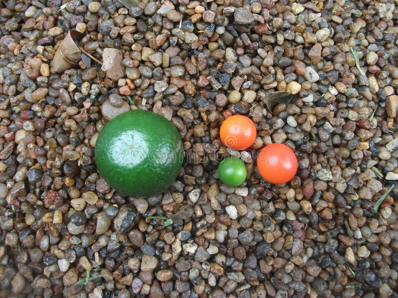 Sinaasappelen in miniatuur stock fotografie