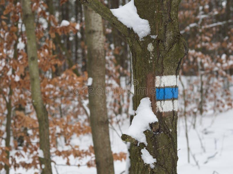 Sinal azul para o turista dos caminhantes na árvore coberto de neve, ora defocused foto de stock royalty free
