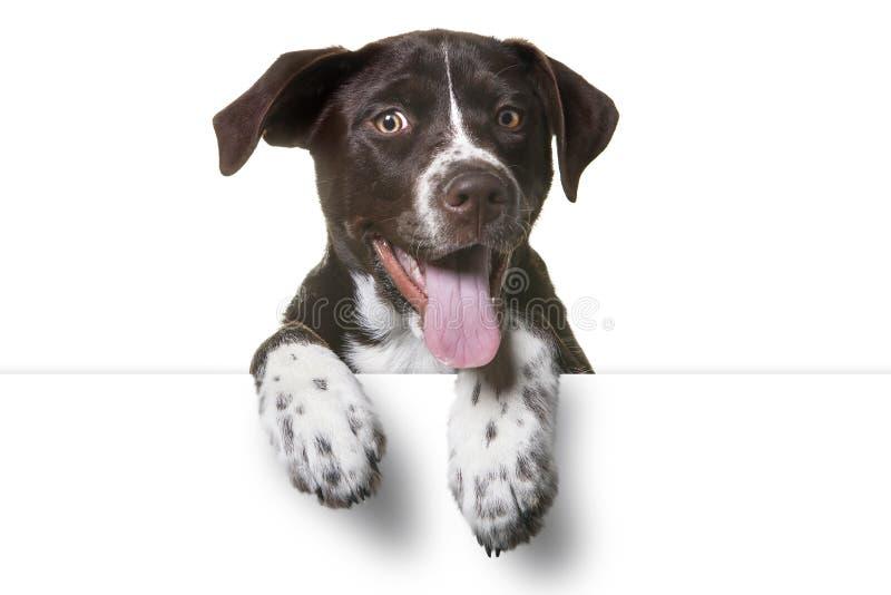 Sinal branco vazio do cachorrinho fotografia de stock royalty free