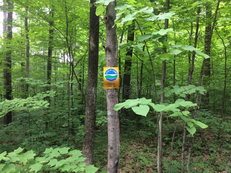 Sinal da floresta dos Estados de Nova Iorque imagens de stock royalty free