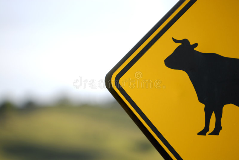 Sinal da vaca -- Nenhuma Bull!! imagem de stock