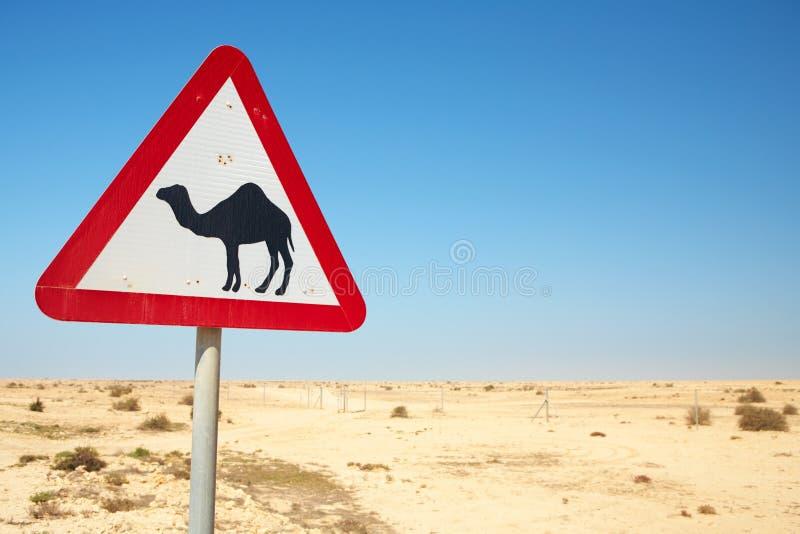 Sinal de aviso do camelo imagens de stock royalty free