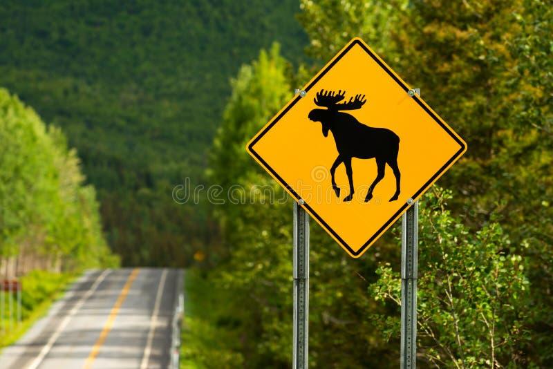 Sinal de aviso dos alces ao lado de uma estrada foto de stock royalty free