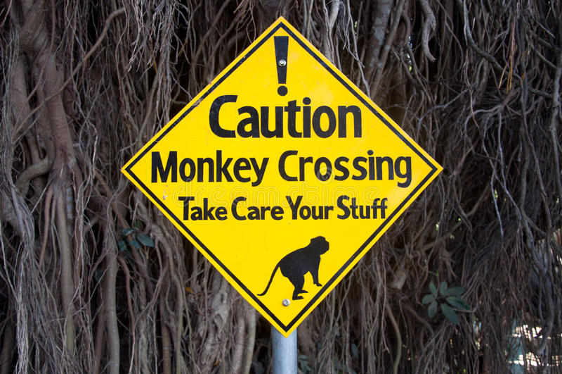 Sinal de aviso - macacos que cruzam a estrada e que tomam de seu material fotos de stock royalty free