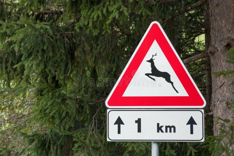 Sinal de estrada de advertência para a presença animal por muito tempo uma rua italiana da montanha fotografia de stock