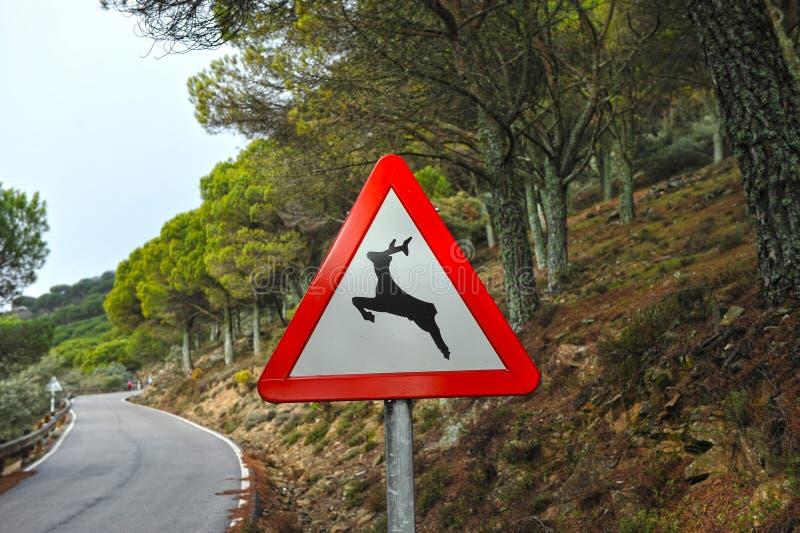 Sinal de tráfego do perigo, animais selvagens imagens de stock royalty free