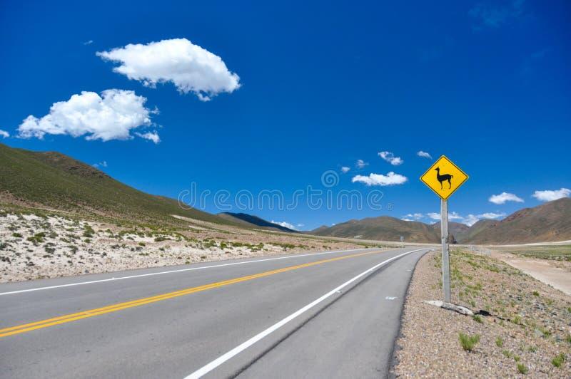 Sinal de tráfego: Olhe para vicunhas!! , Bolívia fotografia de stock