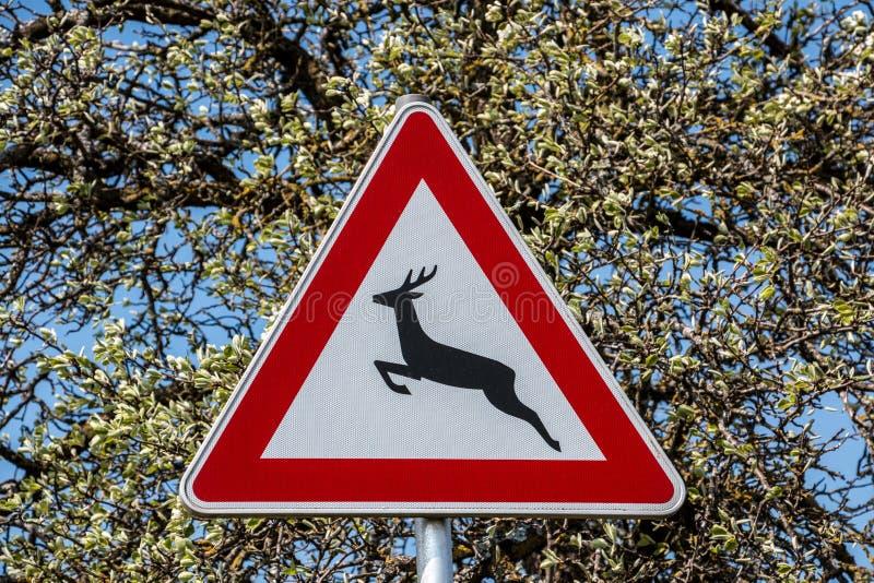 Sinal de tráfego para a fuga do jogo onde os animais selvagens cruzam a estrada imagem de stock