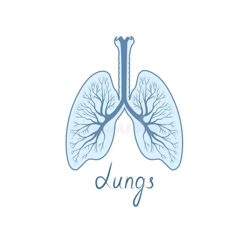 Sinal detalhado dos pulmões Ícone humano da anatomia do órgão interno ilustração royalty free