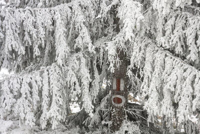 Sinal do turista em uma árvore coberta com a neve fotografia de stock royalty free